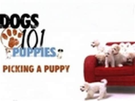 picking a puppy dogs 101 picking a puppy