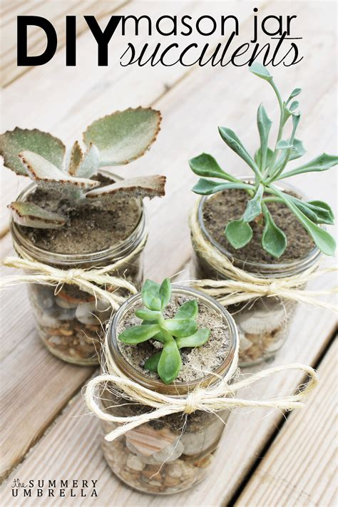 diy succulents diy jar succulents 100 days of