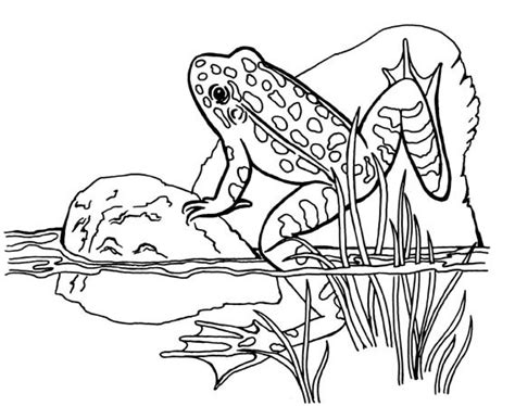 frog habitat coloring page leopard frog coloring page free printable coloring pages