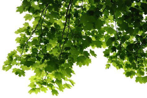 green leaves png image veerendra vijaya pinterest free download leaves corner transparent png image free