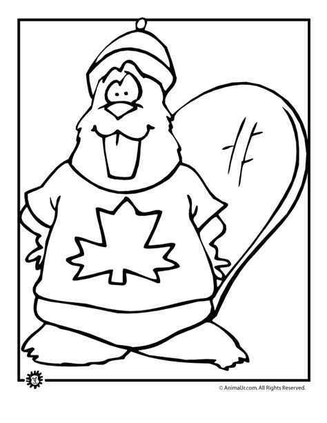 coloring pages canadian animals canadian beaver canada day coloring page animal jr