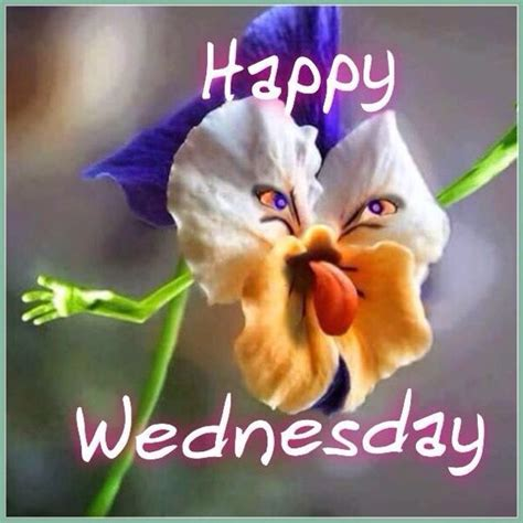 Flowe Funy 15 wednesday memes hump day memes with quotes 2017