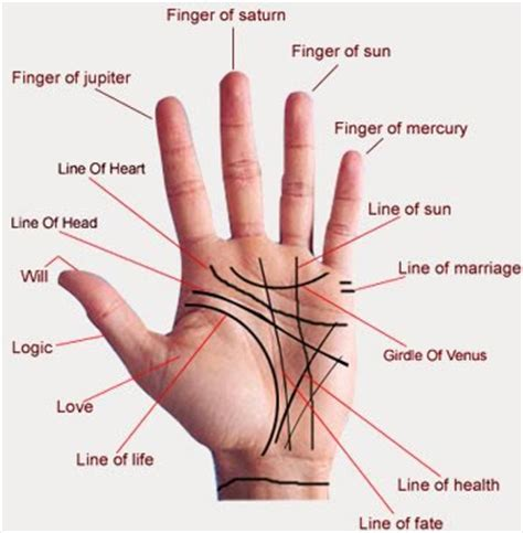 palm reading basic principles and palmistry palm reading for beginners marriage lines