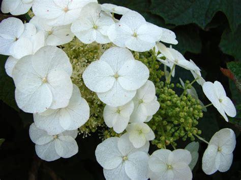 Fleurs Qui Resistent Au Vent by R 233 Sistants Froid S 233 Cheresse Courants Tout