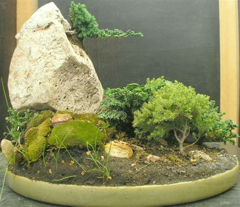 bonsai de copal el en baja california en mercado libre m 233 xico duda con 225 rbol compatible con juniperos