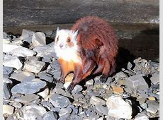 Mysterious Flying Animal Spotted in S.W. China Cave Japanese Giant Flying Squirrel