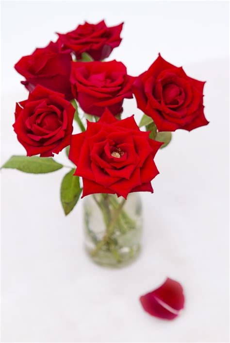 order flowers order flowers easily mygiftsexpress