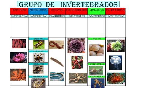 fotos animales invertebrados dibujos invertebrados y vertebrados dibujos invertebrados