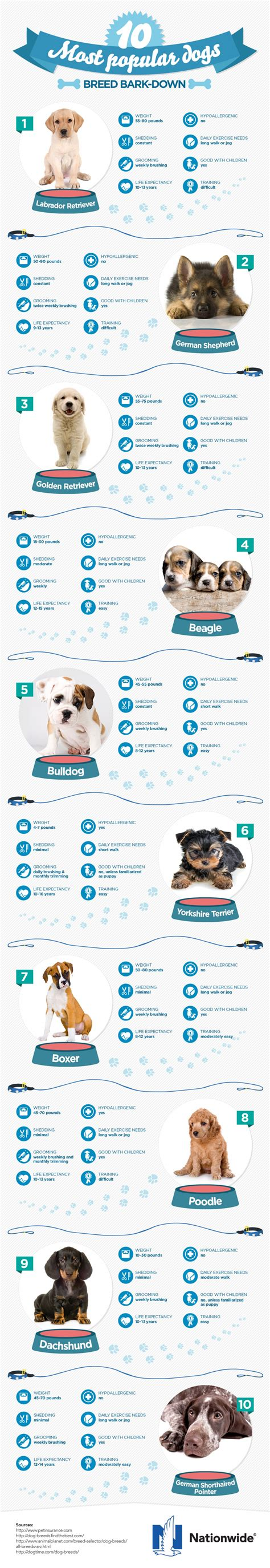 most popular breeds a breakdown of the 10 most popular breeds daily infographic
