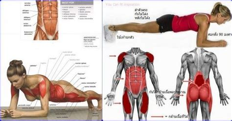 plank exercise benefits for a powerful abs workout http www all bodybuilding 2017 03 plank