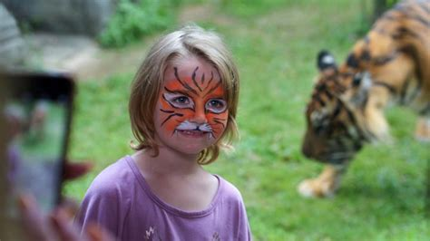 gambar wajah harimau sumatera  bagus gambar pixabay