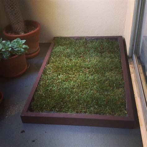 grass box using a grass box as an indoor potty solution for your