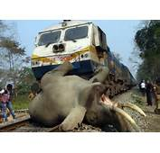 Three Elephants Run Over By Train In WB