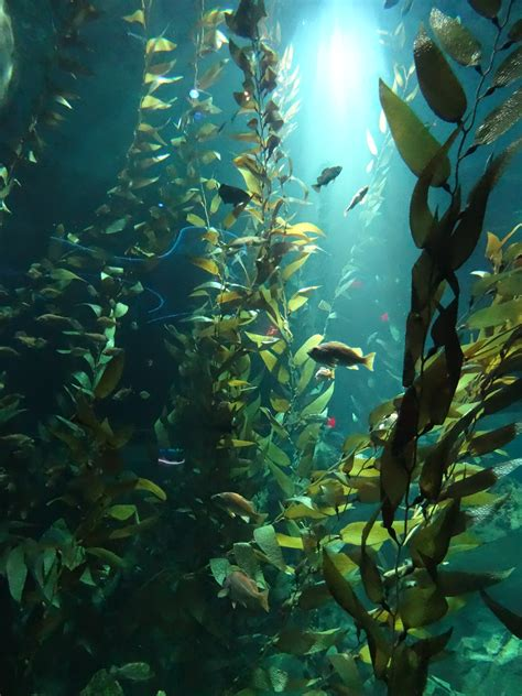 The In The Kelp from the chill of canadian waters to the hypnotic kelp