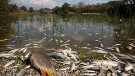 en bretagne  pesticide eradique toute vie aquatique
