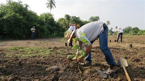 listado de beneficiados por la conafor 2016 por concluir la etapa de reforestaci 243 n en colima conafor