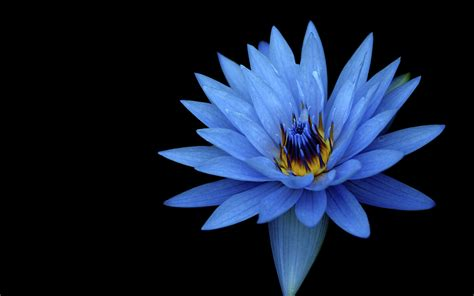 wallpaper hitam sony sony xperia z stock blue flower wallpapers hd wallpapers