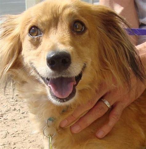halo rescue halo animal rescue nonprofit in az volunteer read reviews donate