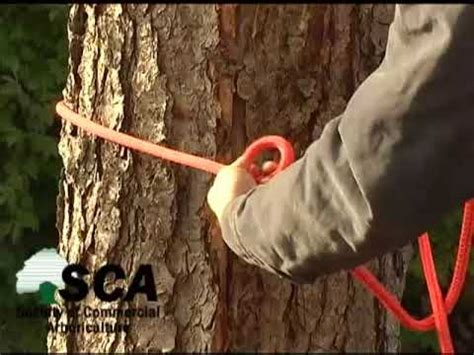 running bowline tree swing running bowline knot for tree workers doovi