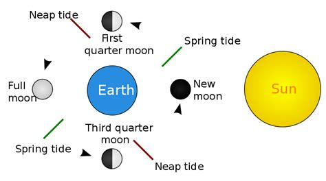 spring tides file tide schematic svg wikimedia commons