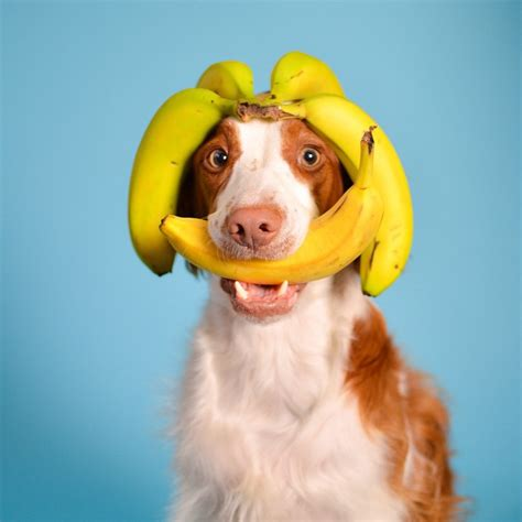 banana for dogs 12 fruits and veggies that your pup will go bananas for