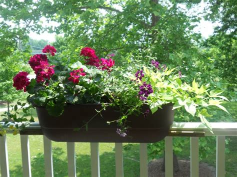 pflanzen für balkon balkon blumenkasten idee