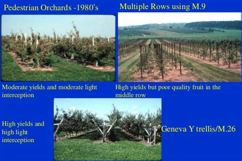 layout of orchard ppt ppt fruit apple tree orchard systems robinson cornell 2014 eng