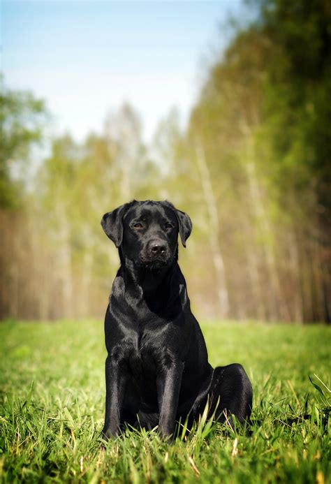 how to dogs to sit how to teach a to sit a complete guide from totally