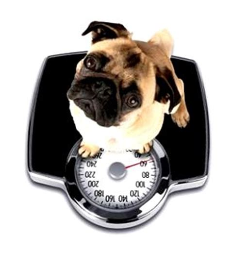 6 week puppy food how it works healthy food exercise weight loss diet