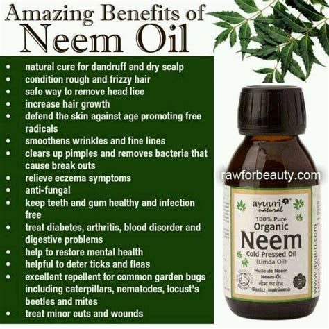 neem oil for bed bugs phenomenal health and beauty benefits of neem oil great