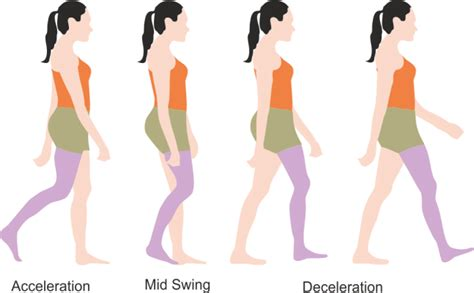 swing through gait concept of gait cycle explained everything physiotherapy