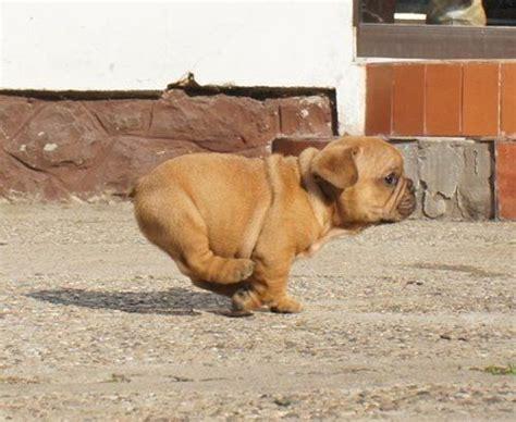 puppy power puppy power