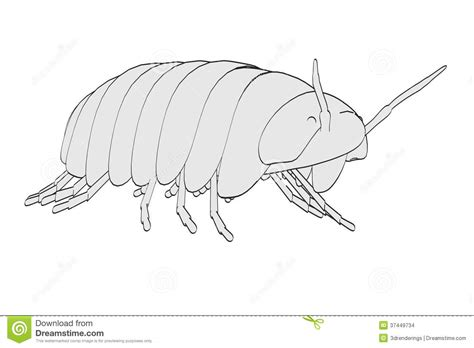 pillbug diagram image of pill bug stock images image 37449734