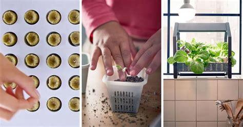 il giardino idroponico ecco il giardino idroponico ikea per coltivare in casa sempre