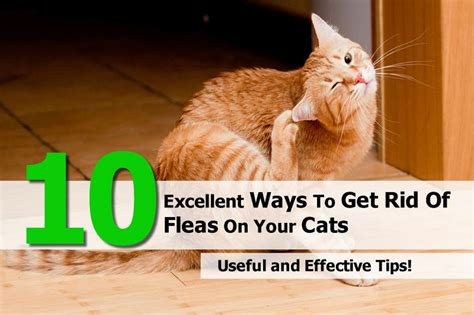 10 excellent ways to get rid of fleas on your cats