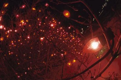 how to attach christmas lights to outdoor bare branch