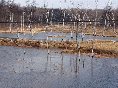garden state management 28 images garden state