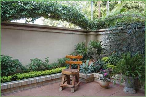 plantas para patio plantas para patios cheap with plantas para patios