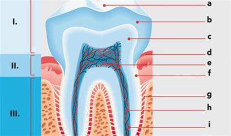 Beschriftung Zahn by Z 228 Hne Netdoktor At