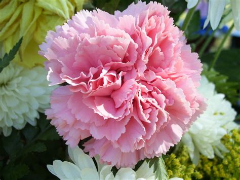 Jesus Home Decor by Flower Photography Carnations