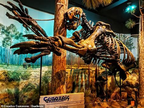 fossil remains   ice age sloths  size  elephants  preserved  asphalt  ecuador