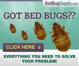 Alcohol Kill Bed Bugs Do I Have Bed Bugs Are These Bed Bug Bites
