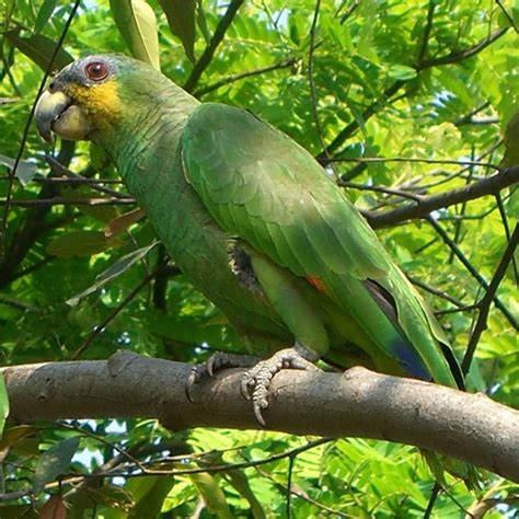 pet species 10 intelligent and friendly pet parrot species