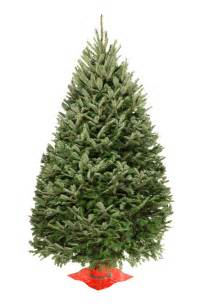 wholesale balsam fir christmas trees valfei 100 country
