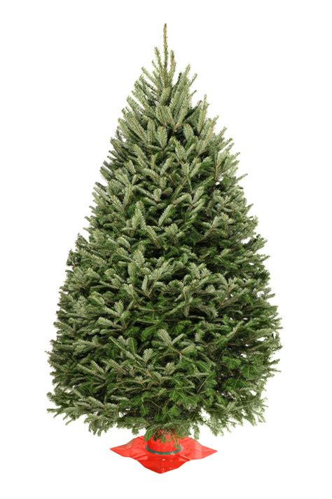 wholesale balsam fir christmas trees valfei