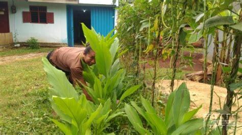 Tanaman Sayuran Dan Bumbu Oregano tambah pemasukan dengan budidaya tanaman bumbu di