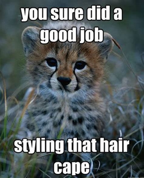 Cute Baby Animal Memes - imgs for gt cute funny baby animals meme