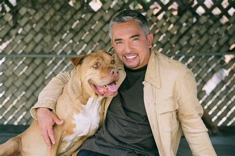 cesar millan puppy classify cesar millan the whisperer