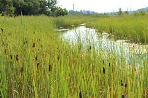 lcp wetland restoration onondaga lake cleanup