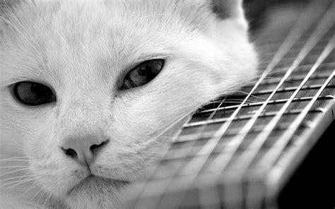 filme schauen cats katze gitarre stimmung schauen katzen pov hintergrundbilder